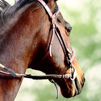 Shop Horse Riding Tack