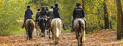 Expert Advice - Horse Riding