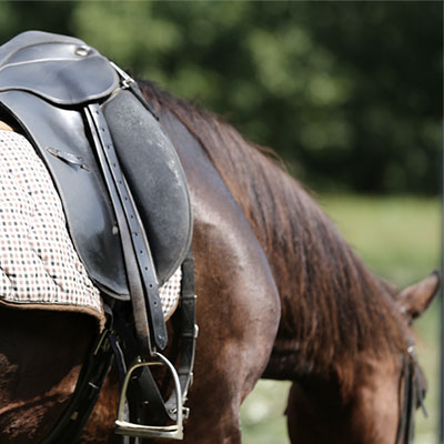 Guide To Horse Riding and Stable Equipment